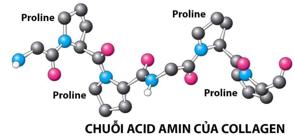 Collagen chiếm tới ⅓ tổng lượng Protein của cơ thể