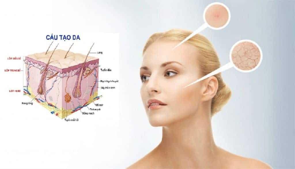 Collagen có vai trò quyết định đến độ đàn hồi và săn chắc của làn da